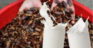 The World's Super food in the Future This 'Cockroach Milk' is All We Need to Survive