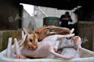 Cat Lover' Slaughters 100 Cats a Day and Sells Them in Chinese Markets as 'Rabbit Meat'