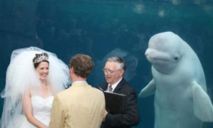 This Unexpected Guest Crashed a Wedding and Stole the Limelight from the Couple This Is Crazy!