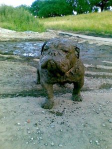 10+ Reasons You Should Never Let Your Dog Play In The Mud