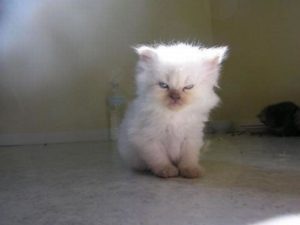10+ Of The World's Angriest Kittens Ever