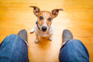 8 things your dog tries to tell you. You must pay close attention, you are suffering