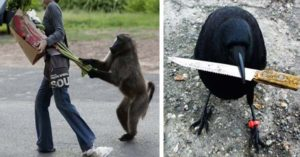 9 Animals That Committed Crimes and Were Caught Red-Handed