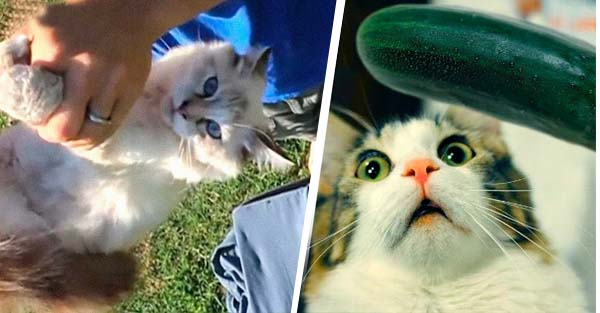 10 amazing things you did not know about cats