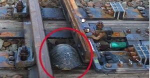 Rail Workers in Japan Built 'Special Tunnels' for Turtles so They Can Cross Safely