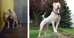25+ Photos Of Dogs Before & After Their Adoption That Will Melt Your Heart