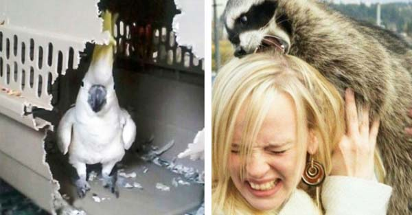 18 Times Animals Were Total Jerks