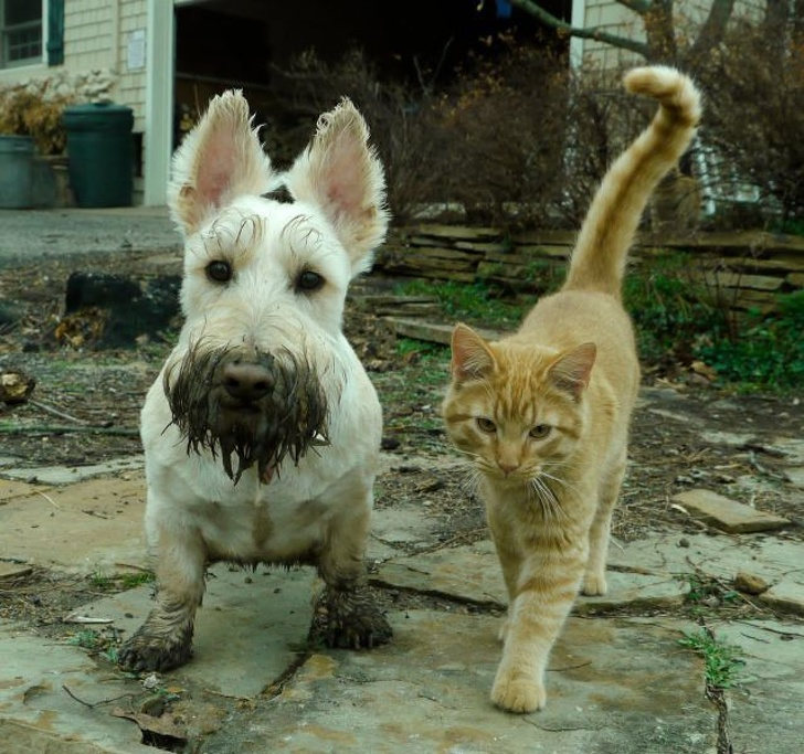 Beautiful Friendships Between Cats and Dogs That Could Make Anyone Smile